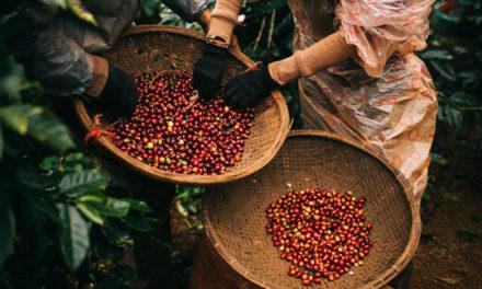 Thị trường cà phê Việt nằm trong tay ai?